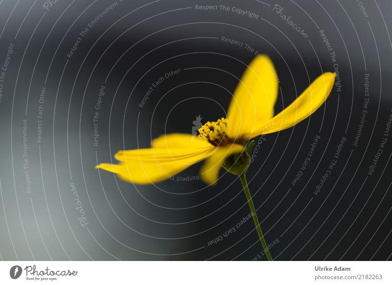 Stauden Sonnenblume Natur Pflanze Blume Einsamkeit dunkel schwarz gelb Blüte Herbst Traurigkeit Garten Tod Park Blühend einzigartig Hoffnung