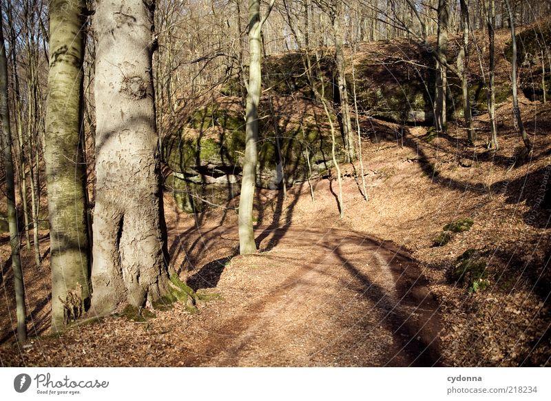 Waldweg Natur Baum Blatt ruhig Erholung Leben Herbst Umwelt Freiheit Bewegung Wege & Pfade Zufriedenheit Zeit Felsen Wandel & Veränderung