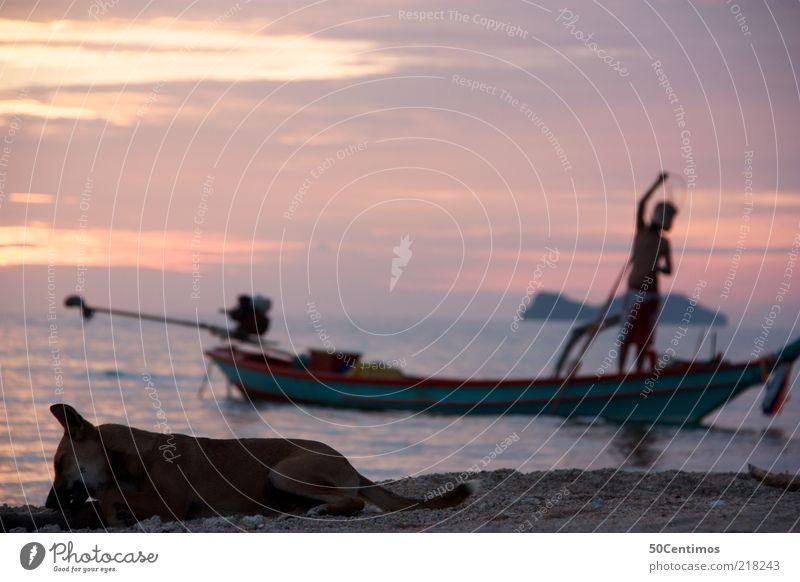Das abendliche Strandleben Ferne Sommer Meer Mann Erwachsene 1 Mensch Natur Wasser Sonnenaufgang Sonnenuntergang Küste Thailand Fischerboot Haustier Wildtier