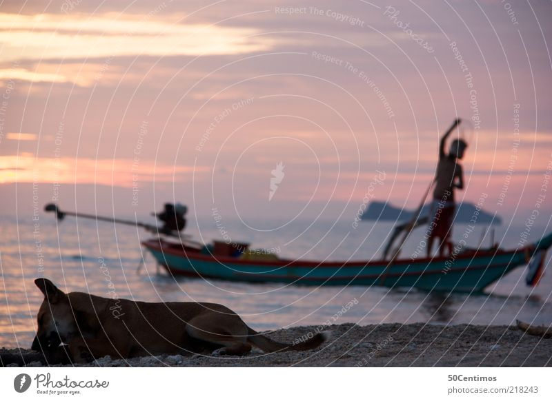 Das abendliche Strandleben Mensch Mann Natur Wasser Meer Sommer Strand ruhig Tier Ferne Leben Erholung träumen Hund Zufriedenheit Wasserfahrzeug