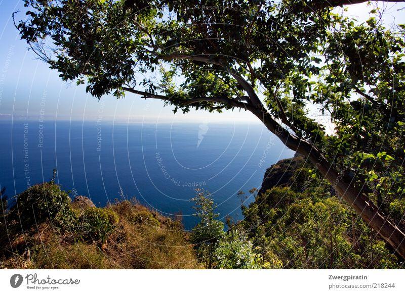 Sommersehnsucht Natur Wasser grün blau Baum Pflanze Erholung Küste Horizont Felsen Wachstum Sträucher Unendlichkeit Reisefotografie trocken