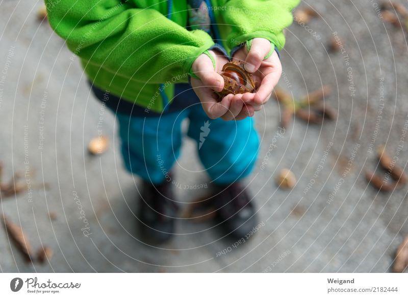 Kastanienmurmel harmonisch Wohlgefühl Erholung ruhig Kind Kleinkind Mädchen Junge Kindheit 1 Mensch Glück Neugier trösten dankbar Herbst Kindergarten