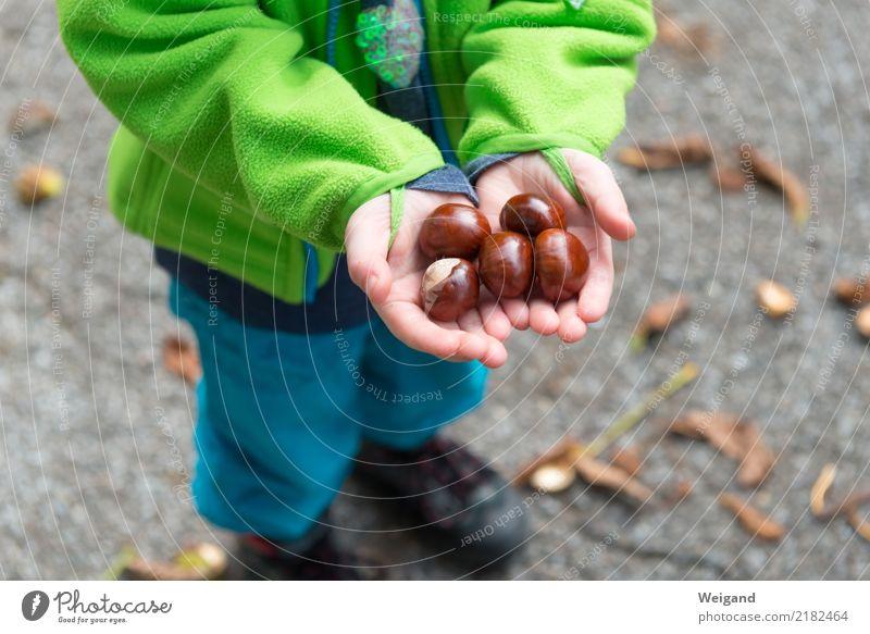 Herbstschatz Kindergarten Schulkind Kleinkind Mädchen Junge Kindheit 3-8 Jahre festhalten Zusammensein braun gewissenhaft Vorsicht Gelassenheit geduldig ruhig