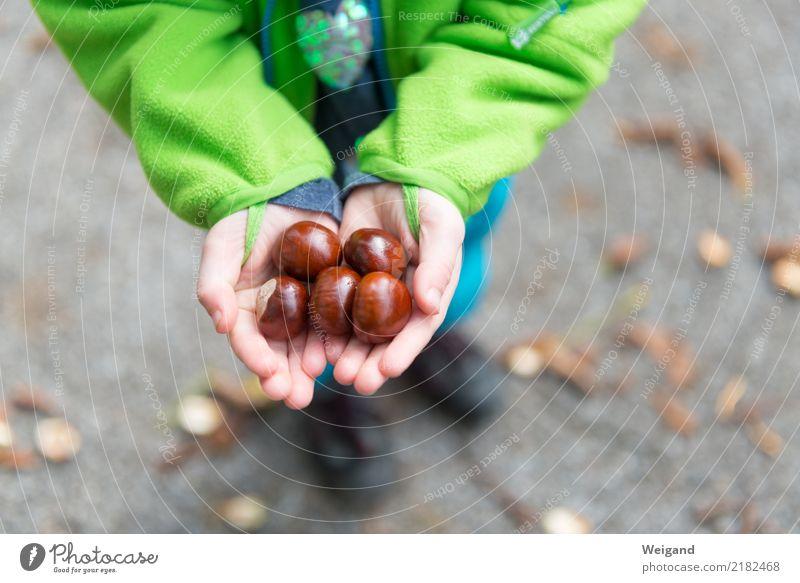 Schatzsuche Kind Mensch Hand Mädchen Herbst Junge Familie & Verwandtschaft Glück glänzend Kindheit Erfolg lernen beobachten entdecken Sammlung Kleinkind