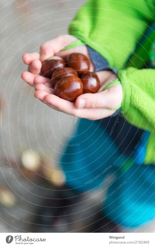 Kastanienschatz harmonisch Wohlgefühl Zufriedenheit Sinnesorgane Erholung ruhig Meditation Oktoberfest Erntedankfest Mensch Kind Kleinkind Mädchen Junge