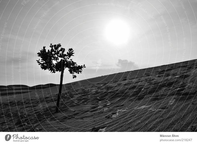 Good Morning, Vietnam. Umwelt Natur Landschaft Urelemente Erde Himmel Sonne Sonnenlicht Sommer Klima Wetter Schönes Wetter Dürre Pflanze Baum Hügel Wüste Oase