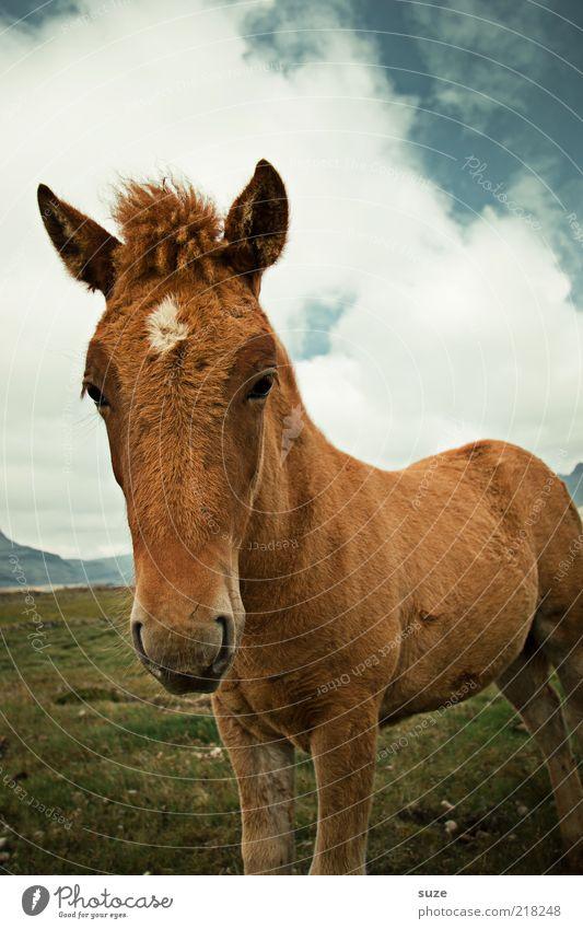 Frischling Himmel Natur schön Tier Wolken Umwelt Wiese Tierjunges braun natürlich wild Wildtier frei niedlich Pferd Neugier