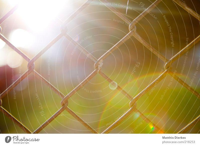 Zaun Natur Sonne Herbst Umwelt ästhetisch gefangen Licht Blendenfleck Sonnenuntergang Maschendrahtzaun Sonnenfleck