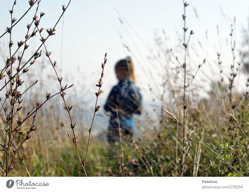 Auf dem Hügel Kind Himmel Natur Pflanze Mädchen Umwelt Wiese Herbst Gras Denken hell Park warten natürlich Sträucher beobachten