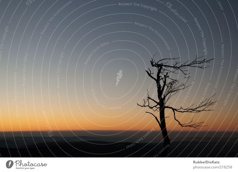 Sturmfrisur 2 Natur alt Himmel Baum blau schwarz dunkel Herbst oben Berge u. Gebirge Landschaft Erde Umwelt Horizont ästhetisch