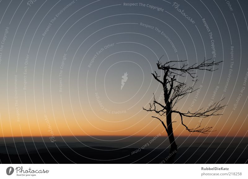 Sturmfrisur 2 Umwelt Natur Landschaft Erde Himmel Wolkenloser Himmel Nachthimmel Horizont Sonnenaufgang Sonnenuntergang Herbst Klima Dürre Baum Berge u. Gebirge