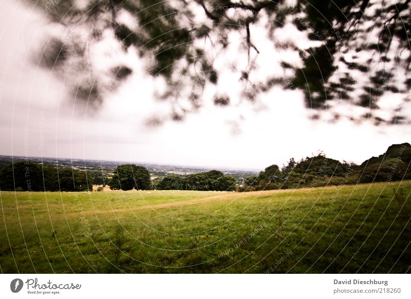 Stürmische Zeiten Natur Landschaft Pflanze Luft Himmel Wolken Sommer schlechtes Wetter Baum Gras Blatt Grünpflanze Wiese Wald grün Waldrand Ast Republik Irland