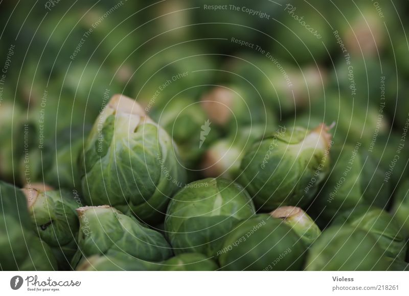 son Kohl (Rosenkohl) Lebensmittel Ernährung Gesundheit grün Brassica Kreuzblütengewächse Gemüse Farbfoto Nahaufnahme viele mehrere natürlich ökologisch
