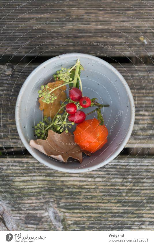 Herbstwelt Schalen & Schüsseln harmonisch Wohlgefühl Zufriedenheit Sinnesorgane Erholung ruhig Meditation Duft Erntedankfest verblüht Glück Wärme orange achtsam