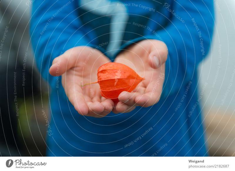 Der rote Schatz harmonisch Wohlgefühl Zufriedenheit Sinnesorgane Erholung ruhig Meditation Kind Kleinkind Junge Kindheit 3-8 Jahre Herbst drehen entdecken