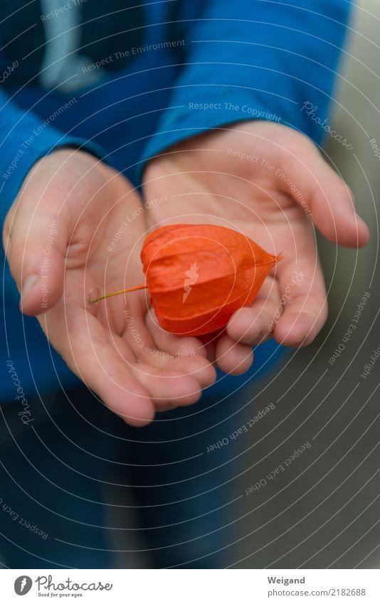 Orange harmonisch Wohlgefühl Zufriedenheit Sinnesorgane Erholung ruhig Meditation Duft Erntedankfest Kind Kleinkind Mädchen Junge Kindheit Hand 1 Mensch