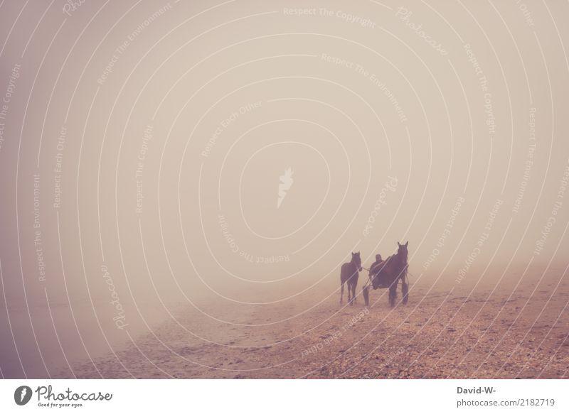 aus dem Nebel Leben Freizeit & Hobby Abenteuer Ferne Mensch maskulin Mann Erwachsene 1 schlechtes Wetter Tier Nutztier Pferd rennen Pferderennen Reiten