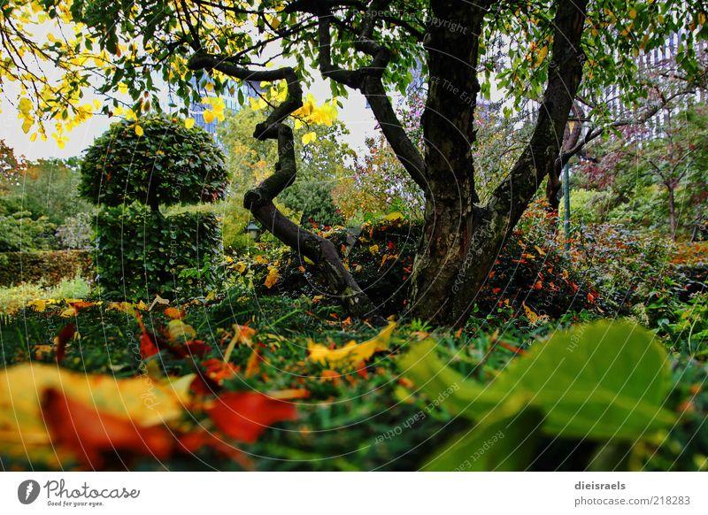 Herbstlicher Park Natur schön Baum grün Pflanze ruhig Blatt Erholung Garten Landschaft braun frisch Wachstum Sträucher