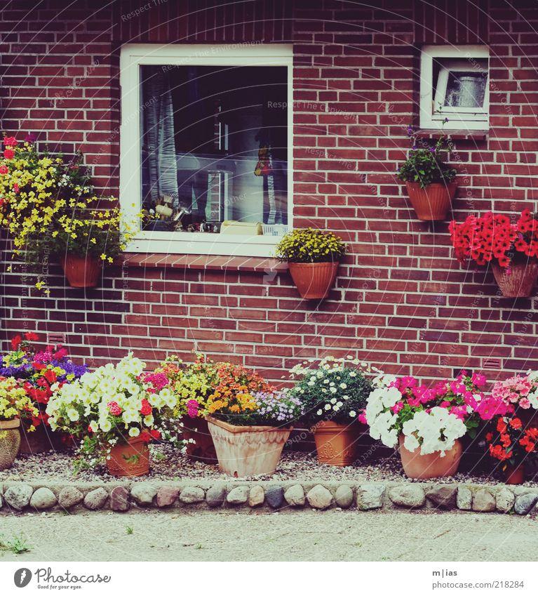 Vorgarten: Ressourcenmanagement Blume Fenster Garten Bildausschnitt ländlich Klischee Blumentopf typisch Einfamilienhaus Blumenkasten Backsteinhaus