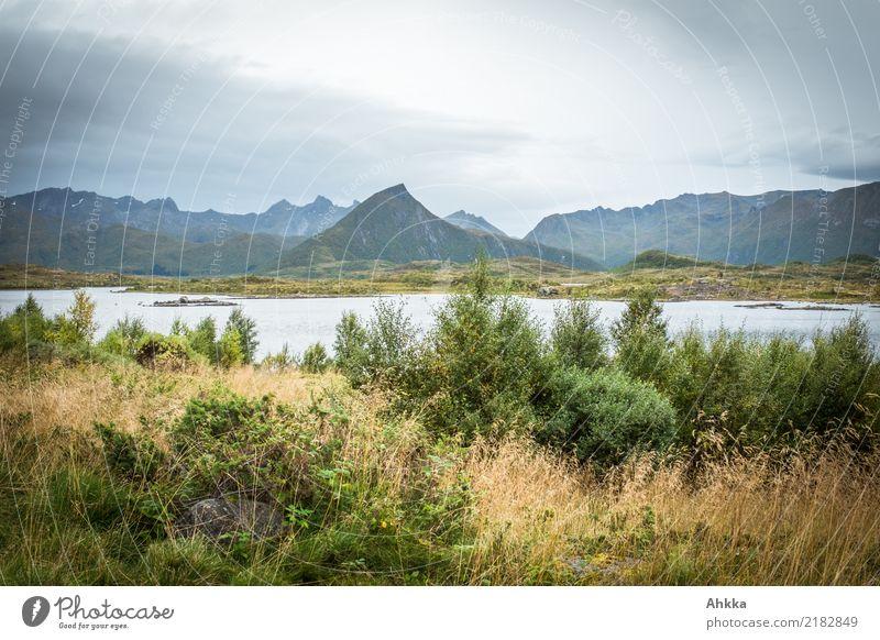 Herbstliche Lofoten Ferien & Urlaub & Reisen Abenteuer Ferne Sträucher Gipfel Fjord entdecken Erholung einzigartig Endzeitstimmung geheimnisvoll stagnierend