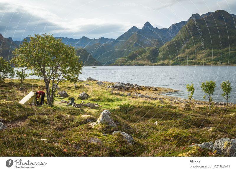Grünes Zelt unter einem Baum vor einem Bergpanorama, Lofoten Mensch Natur Ferien & Urlaub & Reisen Landschaft Meer Erholung Einsamkeit Ferne Berge u. Gebirge