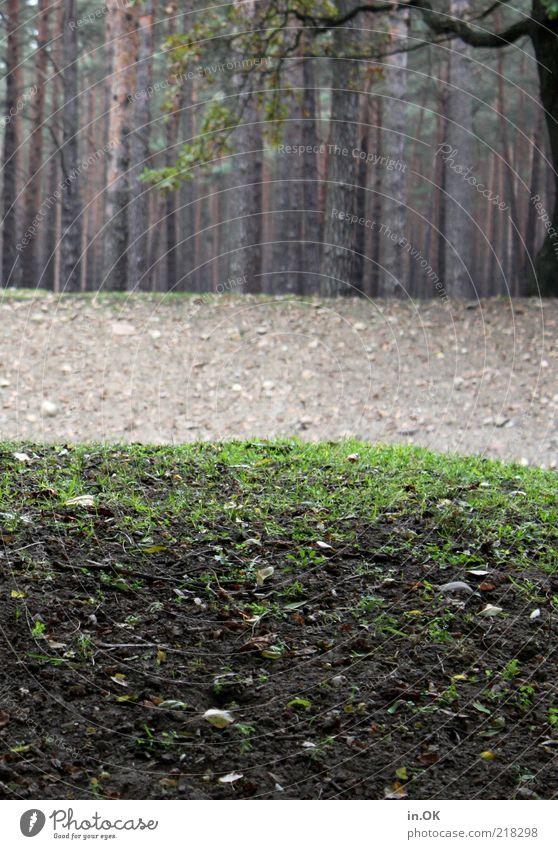 Der Wald hat sich versteckt. Natur Herbst Erholung Zufriedenheit Romantik Umwelt Waldrand Farbfoto Außenaufnahme Tag Wiese Gras Waldboden Baum Baumstamm