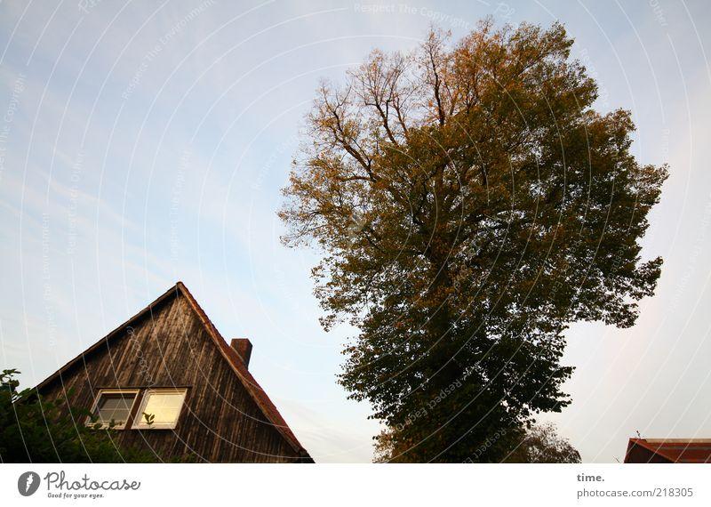 Sturm kommt auf Haus Baum Dachgiebel Menschenleer Fenster Dämmerung Außenaufnahme Baumkrone Blatt Herbst Schornstein Froschperspektive Gedeckte Farben Pflanze