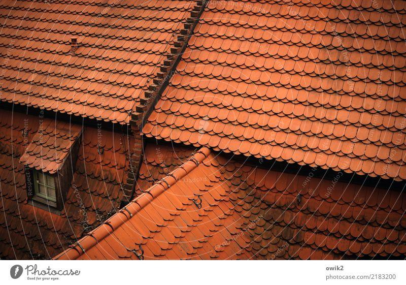 Meißen von oben Meissen Deutschland Dach Dachfenster Dachziegel rot geschlossen viele Farbfoto Außenaufnahme Detailaufnahme Muster Strukturen & Formen
