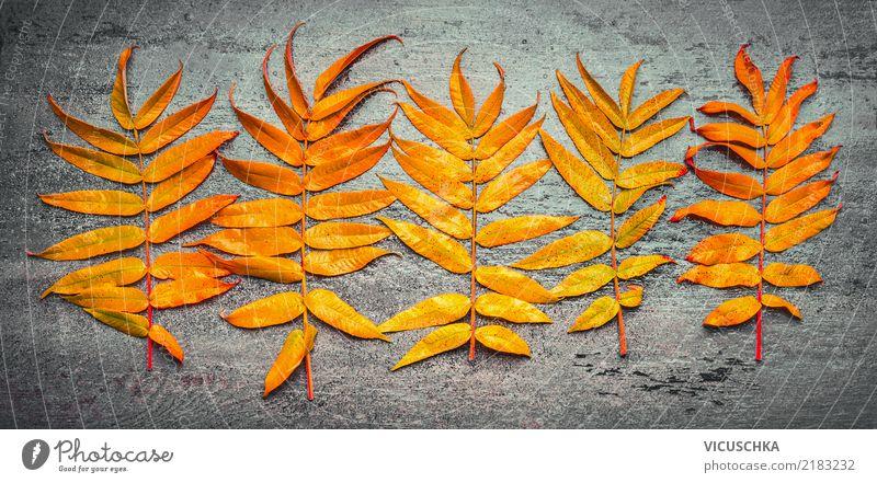 Herbst Laub Lifestyle Stil Design Garten Dekoration & Verzierung Natur Pflanze Blatt gelb Tisch Studioaufnahme Nahaufnahme Textfreiraum Mitte Vogelperspektive