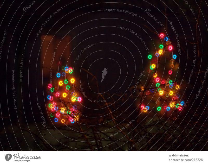 Weihnachtsbäume braun schwarz Vorfreude ästhetisch Lichterkette Weihnachtsbaum Spiegellinsenobjektiv (Effekt) Farbfoto mehrfarbig Außenaufnahme Experiment