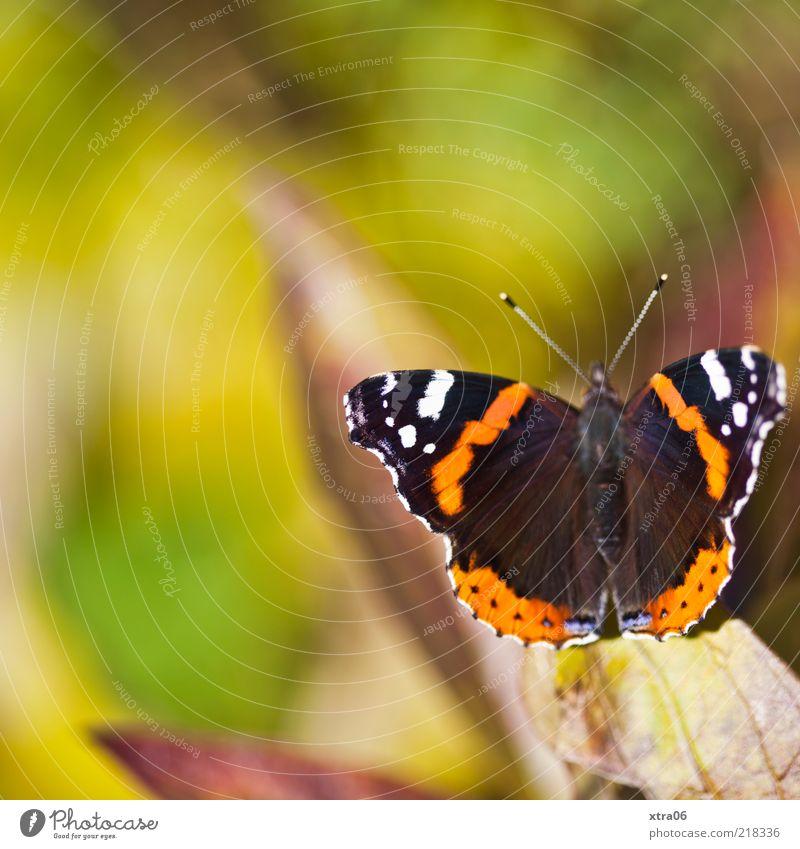 heute scheint nochmal die sonne grün Sommer Tier Frühling sitzen Flügel Schmetterling Fühler