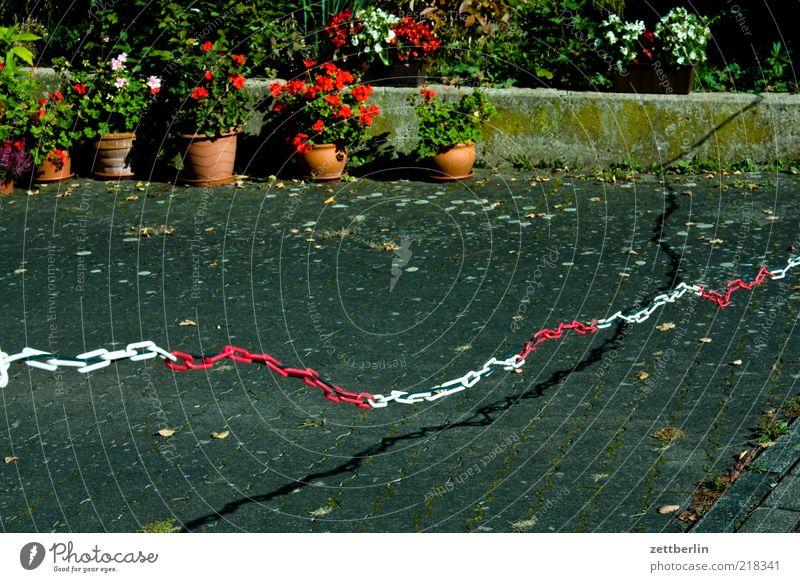 Nachbarschaft Natur weiß Pflanze rot Sommer Blume Umwelt Blüte Garten Stil geschlossen Lifestyle Hoffnung Asphalt Kunststoff Grenze
