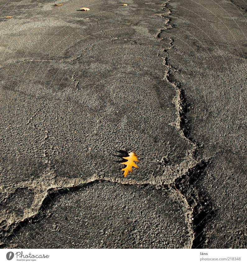 der Winter kann kommen alt Blatt Straße Herbst grau Wege & Pfade Sicherheit Wandel & Veränderung Asphalt Vergänglichkeit Verkehrswege Riss Straßenbelag Reparatur Teer Herbstlaub