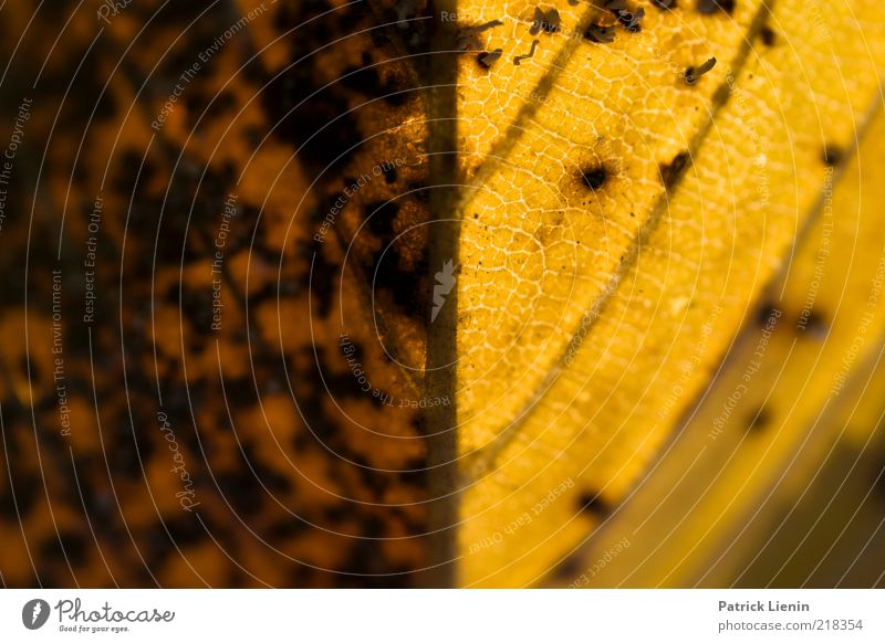 Herbstfarben Natur alt schön Pflanze Blatt dunkel Umwelt Stimmung hell braun 2 orange gut weich Verfall