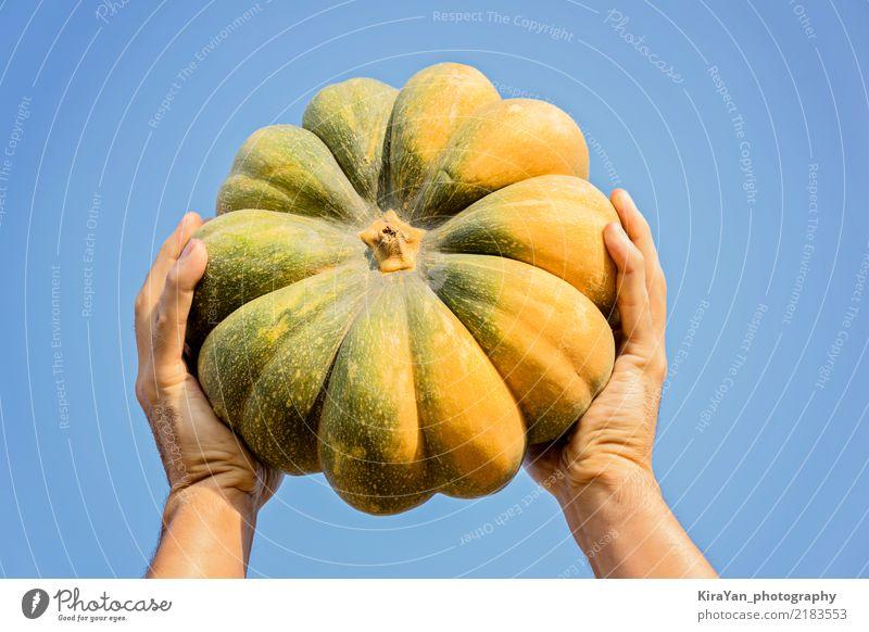 Männliche Hände, die einen reifen Kürbis halten Gemüse Bioprodukte Vegetarische Ernährung Lifestyle Feste & Feiern Erntedankfest Halloween Gartenarbeit Mann