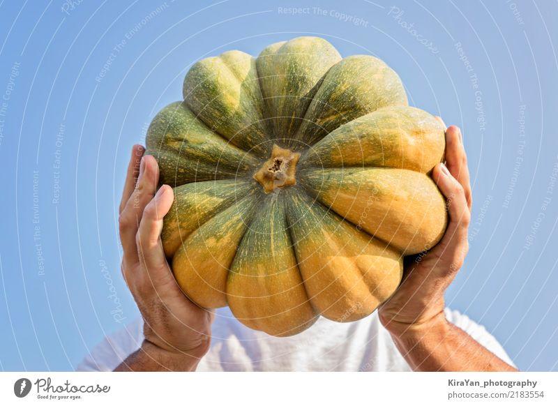 Die Hände des Bauern halten einen großen Kürbis Gemüse Vegetarische Ernährung Freude Spielen Freiheit Sonne Erntedankfest Halloween Gartenarbeit Landwirtschaft