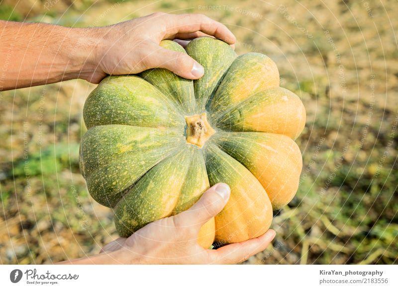 Hände des Landwirts, der einen großen Kürbis hält Gemüse Vegetarische Ernährung Lifestyle kaufen Sonne Essen Erntedankfest Halloween Gartenarbeit Landwirtschaft