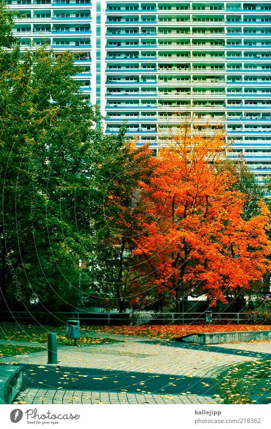 der herbst ist da Natur Stadt Baum Blatt Haus Umwelt Herbst Park Klima Fassade Hochhaus fallen Kopfsteinpflaster Plattenbau Müllbehälter Herbstfärbung