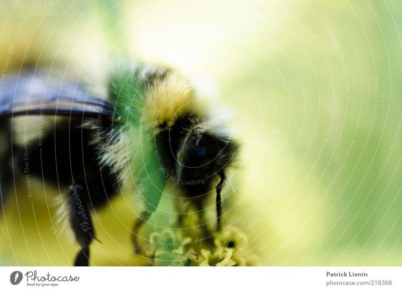 aus einer anderen Zeit Natur schön Blume grün Pflanze Sommer Tier Blüte Kopf Beine Umwelt nah weich Flügel Insekt