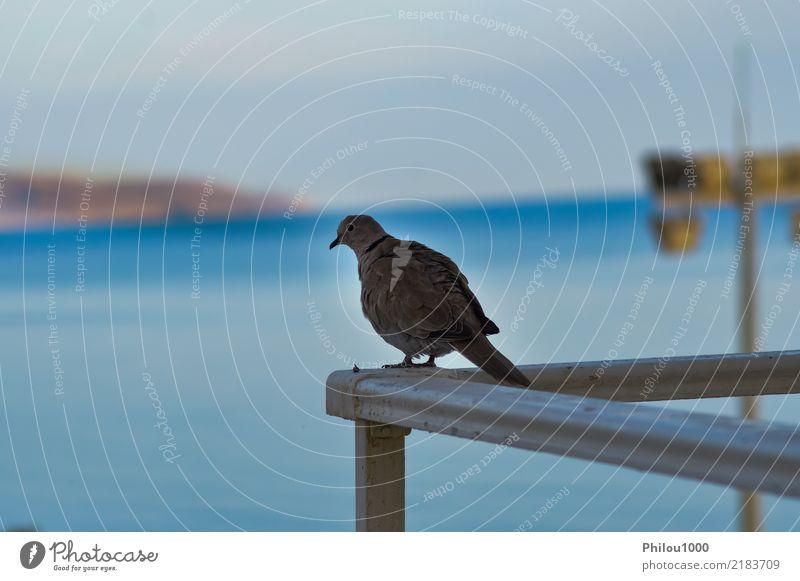 Taube stellte auf der Ecke des Geländers auf Freiheit Menschengruppe Natur Tier Himmel Wolken Vogel fliegen Liebe blau schwarz weiß Reinheit Frieden