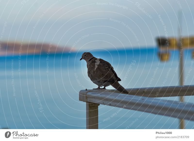 Taube stellte auf der Ecke des Geländers auf Himmel Natur blau weiß Tier Wolken schwarz Religion & Glaube Liebe Freiheit Menschengruppe fliegen Vogel Aussicht