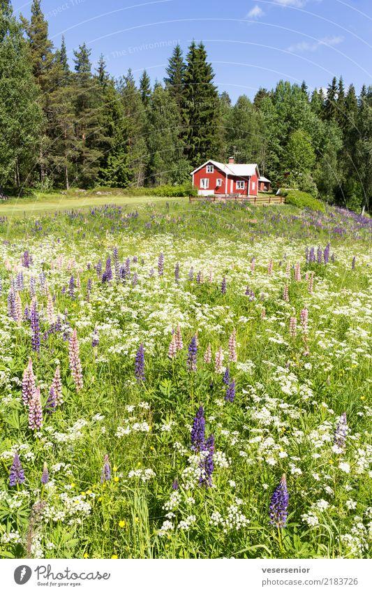 Schwedenhaus 1 Natur Ferien & Urlaub & Reisen Sommer schön Landschaft Erholung Haus ruhig Wald Wiese Tourismus Häusliches Leben Zufriedenheit Wachstum Idylle