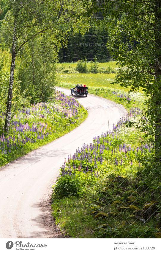 ausfahrt Mensch Natur alt Sommer Landschaft Erholung Leben Lifestyle Senior Stil außergewöhnlich Ausflug Freizeit & Hobby Verkehr PKW retro