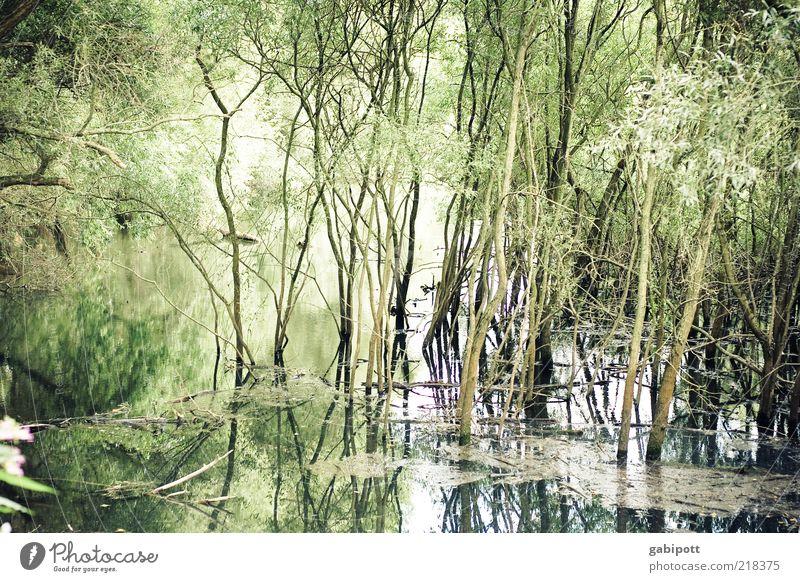 Hochwasser Umwelt Natur Landschaft Pflanze Wasser Klima Klimawandel Wetter Baum Überschwemmung Naturkatastrophe Flußauen Flussufer Rheinauen Wald fluten