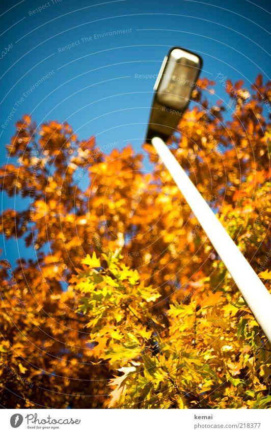 Leuchtende Laterne Natur Himmel Baum Pflanze Blatt gelb Herbst Umwelt Wachstum leuchten Laterne Schönes Wetter Straßenbeleuchtung Herbstlaub Grünpflanze Laternenpfahl