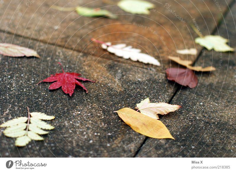 schon fast out of season Natur Blatt Herbst Wind Klima Bürgersteig Herbstlaub schlechtes Wetter verwittert herbstlich dehydrieren Herbstfärbung Betonplatte
