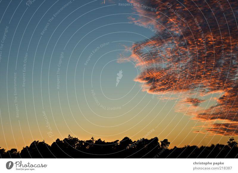 Heiter bis Wolkig Himmel Wolken Sonnenaufgang Sonnenuntergang Herbst Klima Wetter Schönes Wetter Baum Wald bedrohlich dunkel Unendlichkeit schön