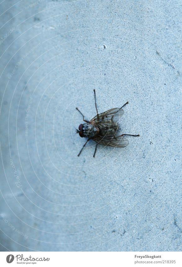 Fliegen-pause.. Natur schwarz Tier kalt Wand grau Beine warten klein sitzen Flügel Insekt krabbeln zierlich geduldig