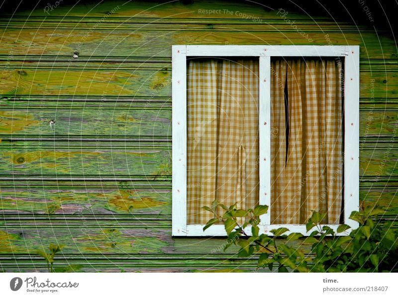 Friede den Hütten Häusliches Leben Haus Holzhütte Fenster Gardine grün zugezogen Vorhang Sträucher Pflanze Profilholz Holzbrett Schalholz Wand brennbar