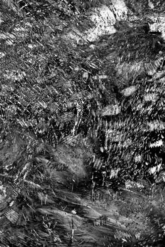 schwarze Federn elegant Stil Design exotisch schön Dekoration & Verzierung Halloween Natur Tier Mode Haustier Vogel Taube Ornament natürlich grau weiß Zierde